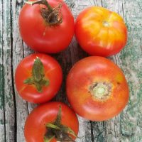 Heirloom Salad Tomato 1kg