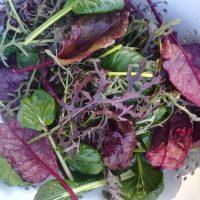 Asian Salad Mix 120g